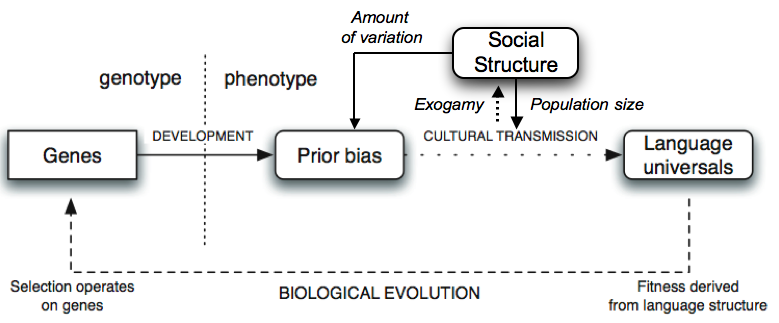 Social Structure And Language Evolution Resolving The Synthetic
