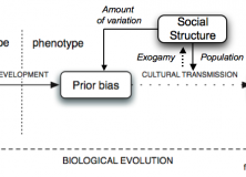 Social structure and language evolution: resolving the synthetic/analytic debate