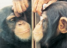 Animal Cognition & Consciousness (I): Mirror Self-Recognition