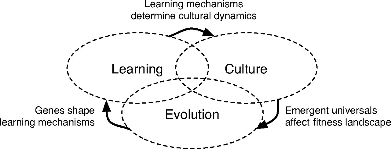culture_evolution_learning