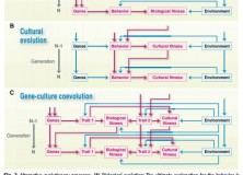 Flow charts presenting alternative processes for Biological evolution, Cultural evolution and Gene-culture coevolution