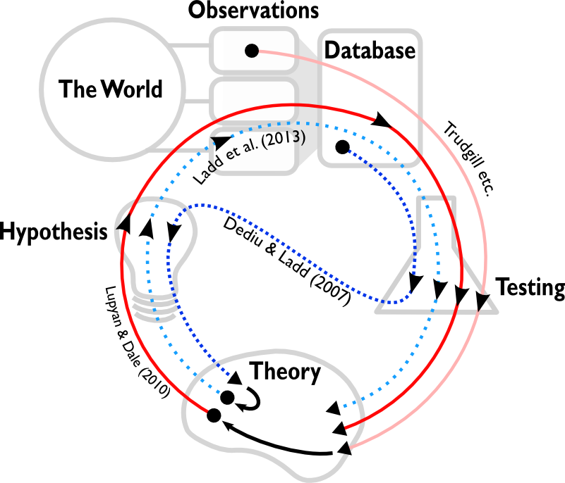 The scientific processes of different nomothetic studies.  Observations are drawn from the world, either as idiographic studies or experiments.  These observations can be compiled into large-scale cross-cultural databases.  Scientific elements include theory, hypotheses and testing.  Trajectories indicate the process of different studies.  Processes start at a dot and continue in the direction indicated by the arrows.  The ideal trajectory is the following:  A theory generates a hypothesis.  The hypothesis suggests data to collect, which is then tested.  The results of the test feed back into the theory.  Lupyan \& Dale (2010) follow this trajectory, although they take their data from a large-scale cross-cultural database.  Lupyan \& Dale's theory was generated by previous testing of (small-scale) observations by Trudgill and others.  The trajectory of Dediu \& Ladd's study differs in two ways.  First, the trajectory starts with large-scale cross-cultural data rather than small-scale observations.  Secondly, the testing generates the hypothesis, which suggests a theory.  However, Ladd et al. (2013) use this theory to motivate a hypothesis which is tested on experimental data.  Since developing theories from small-scale observations takes time and effort, Dediu \& Ladd's study has effectively jump-started the conventional scientific process.
