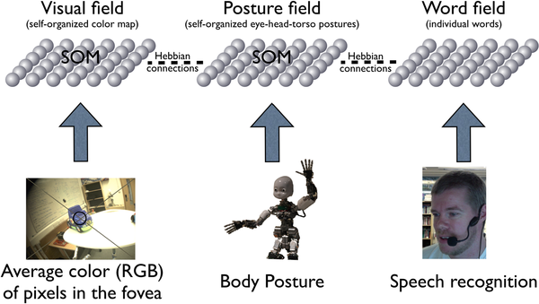 The robots take into account three layers of information - the visual information, the body posture information and auditory word-meaning mappings